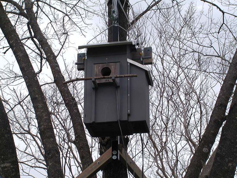 chris' eastern screech owl nest box cam' for 2002